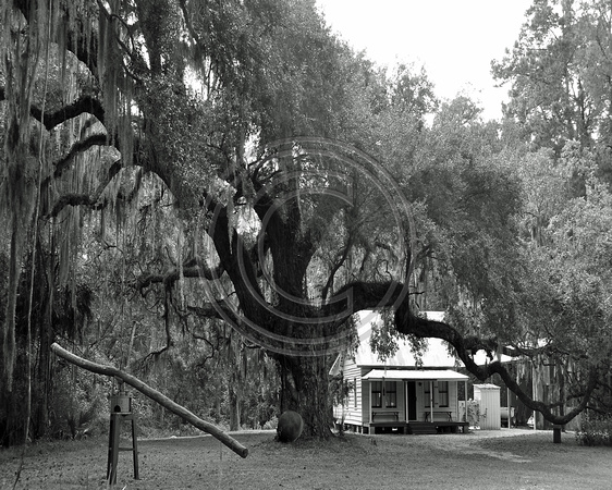 Moses Ficklin Oak and Cottage