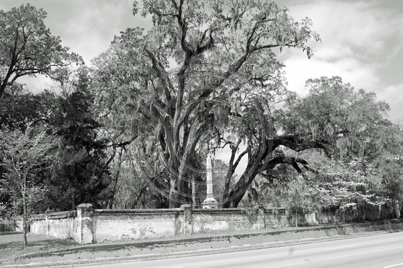Trees and monument